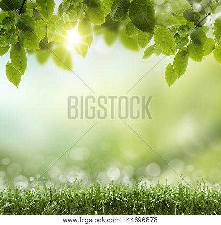 Primavera ou Verão abstrato base de natureza com grama e azul céu nas costas