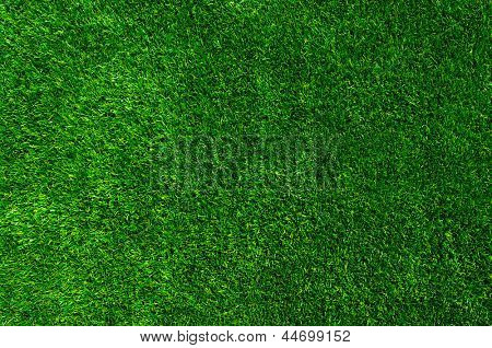 Plano de fundo de uma grama verde