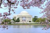 stock photo of thomas jefferson memorial  - Thomas Jefferson memorial framed with beautiful cherry blossoms and Potomac River tidal basin - JPG