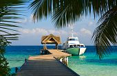 picture of kuramathi  - Yacht moored shot through a opening in the trees - JPG