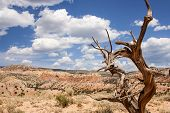 image of juniper-tree  - Colorful landscape with dead tree in New Mexico near Ghost Ranch - JPG
