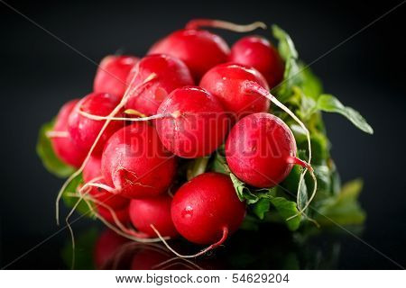 Bundle Of Red Radish