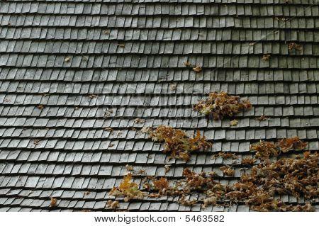 An Autumn Roof