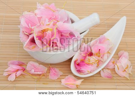 Peony flower petals used in chinese and natural alternative herbal medicine. Paeonia. Fuguihua.
