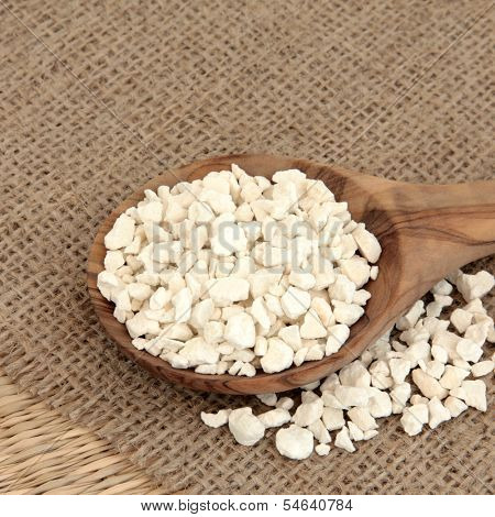 Poria cocus mushroom used in chinese herbal medicine in a wooden spoon over hessian background. Fu ling. Wolfiporia extensa.