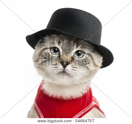 Close-up of a Siamese with red top and top hat, 5 months old, isolated on white