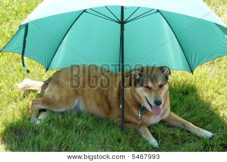 Dog Under A Green Umbrella