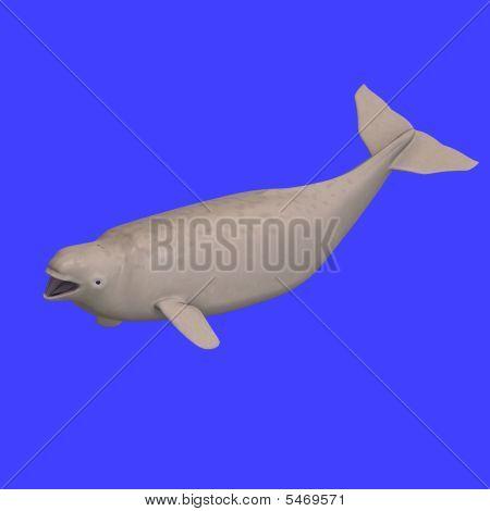 Whitle Beluga Whale Calf