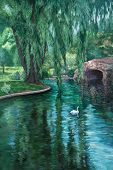image of weeping willow tree  - A white swan swims in a park pond amid reflections of a weeping willow tree - JPG