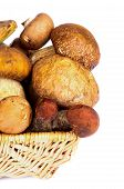 stock photo of bolete  - Wicker Basket with Fresh Ripe Portabello Mushrooms Orange - JPG