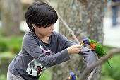 picture of lorikeets  - Details of a rainbow lorikeet perched on a branch in front of a young girl - JPG