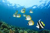 stock photo of biodiversity  - Tropical Fish on coral reef - JPG