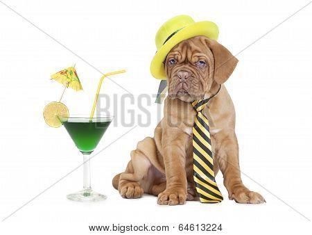 Cocktail Puppy