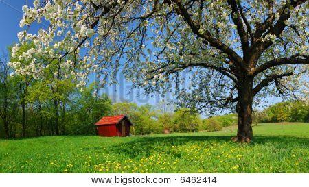 Spring In Slovakia