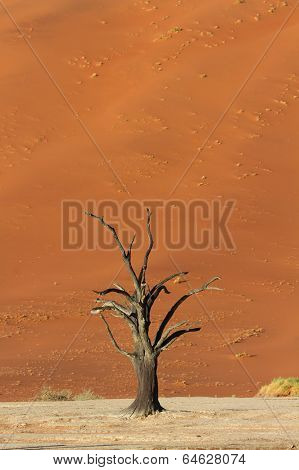Petrified Tree In Front Of A Red Sand Dune