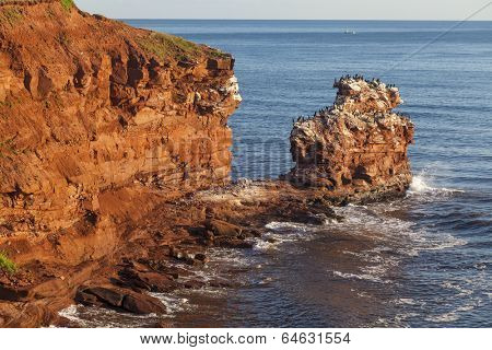 The rocky shore of Prince Edward Island at daybreak illuminating the cliffs and rocks bright red. A colony of cormorants clings to a distant rock stack.