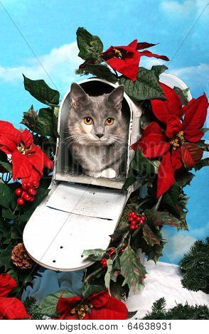 Cat In A Christmas Mailbox