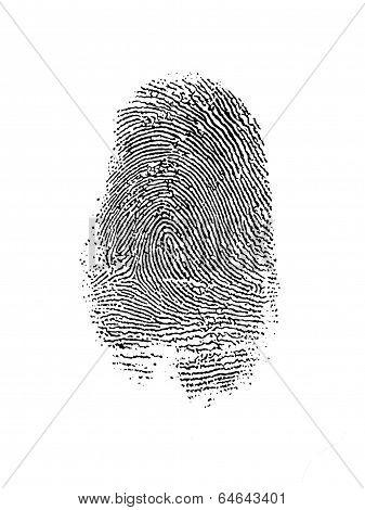 Thumb Print Over White
