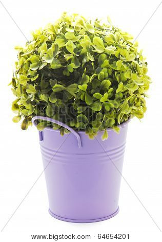 Violet Tinny Planter With Flower