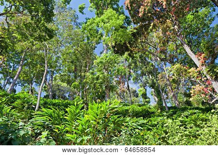 Deep Tropical Forest
