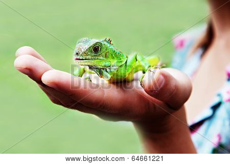 Iguana On Hand