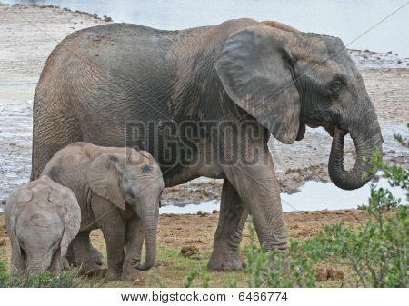 Babysitting Elephant