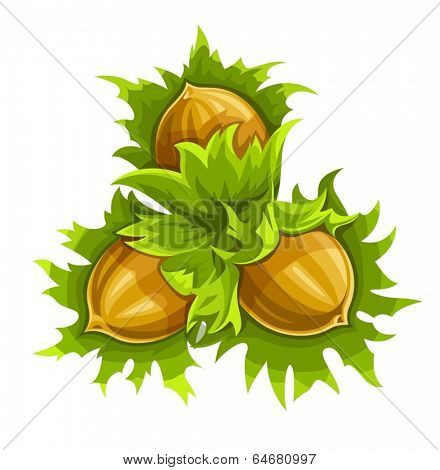 Cluster of three ripe hazelnuts. Eps10 vector illustration. Isolated on white background