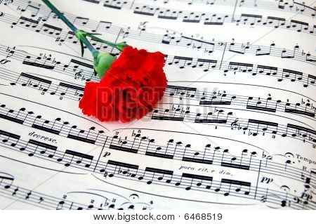 Carnation on Music