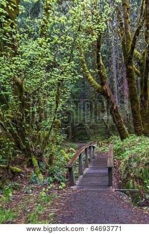 Natures Hiking Path