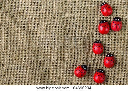 Ladybugs On Gunny
