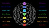 stock photo of merkaba  - The seven main chakras and their meanings - JPG