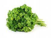 image of horticulture  - Green fresh parsley isolated on white background - JPG