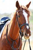 Purebred horse on bright background poster