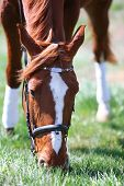 Purebred horse on nature background poster