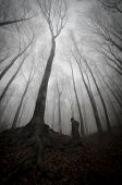 foto of mystery  - Dark mysterious man standing near huge tree in a creepy dark forest with fog - JPG