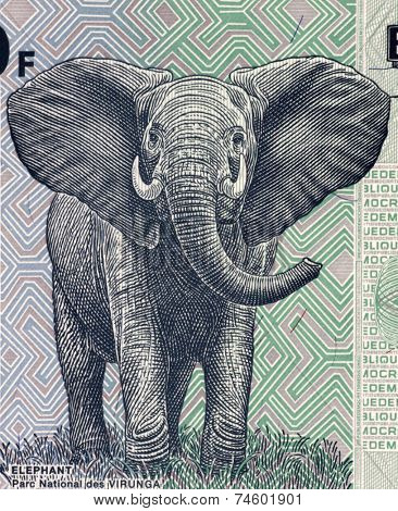CONGO - CIRCA 2007: Elephant on 100 francs 2007 banknote from Congo.