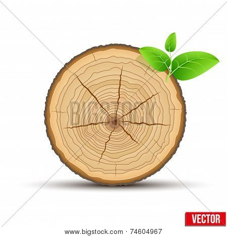 Wood Cross section of tree trunk with green leaves. Vector.