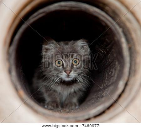Snall Cat