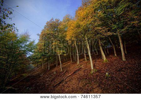 Misty Season Forest