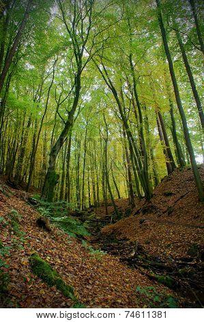 Season Forest