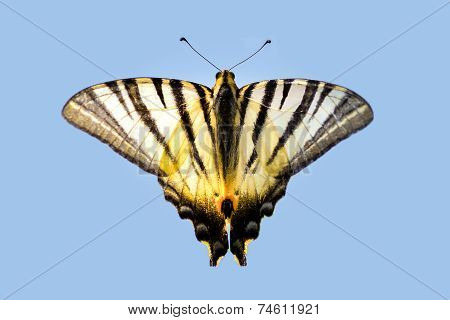 Beautiful Striped Butterfly On A Light Blue Background
