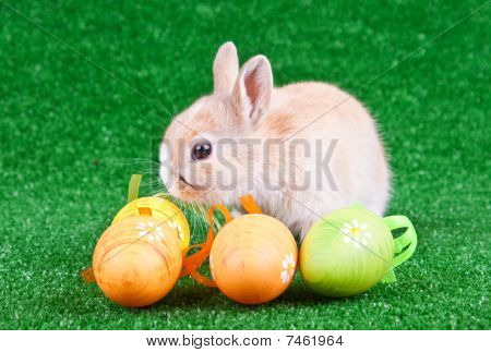 Rabbit And Eggs On Grass
