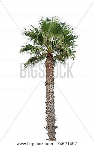 Palm On White