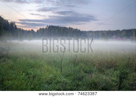 Foggy Green Meadow