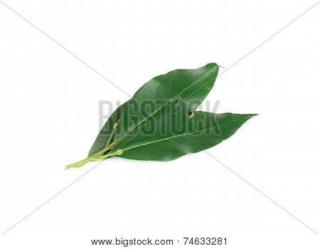 Green bay leaves.
