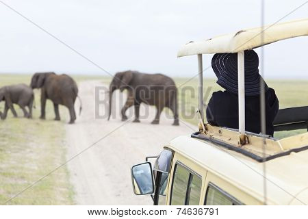 Tourist Watching Elephants