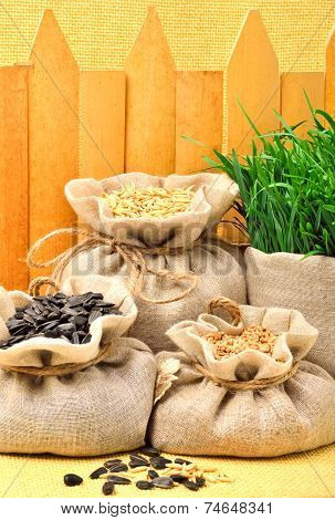 Wheat Grains, Oat Grains And Sunflower Seeds In The Cloth Sacks Against The Fence