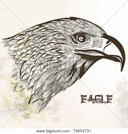 Hand Drawn Vector Eagle