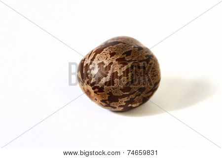 Rubber Seed