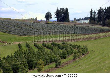 Landscape & tree farms.